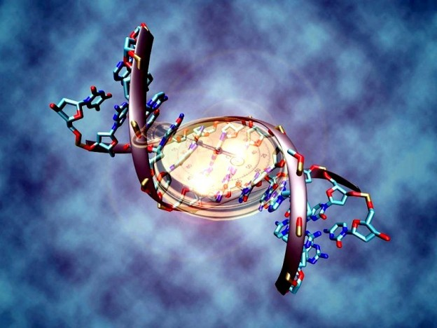reloj-biologico-ADN-624x468